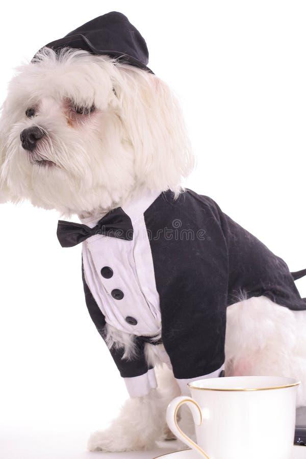 Download Rottura del Doggy immagine stock. Immagine di nero, canino - 3884657