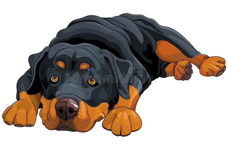 rottweiler stock de ilustración