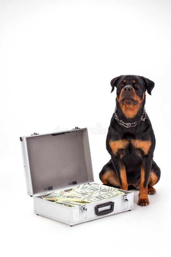 Rottweiler dyplomata z dolarami i pies fotografia royalty free