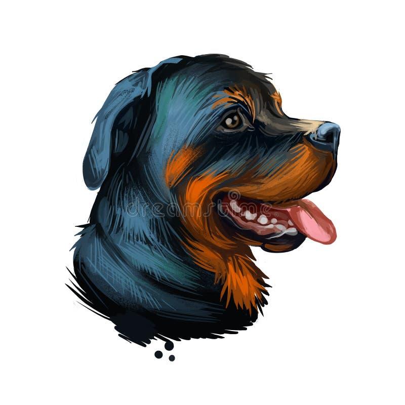 Rottweiler hund portrait isolerad på vit Diagramhand för digital grafik ritad för webben, t-shirt-tryck och marionettskydd Rott vektor illustrationer