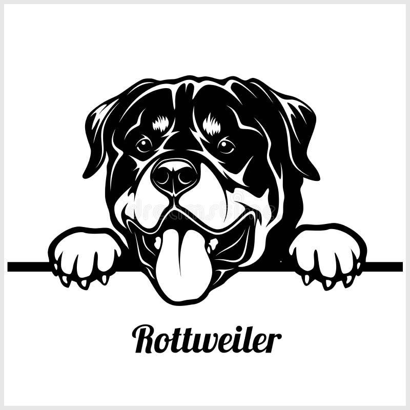 Rottweiler - Hunde spähend - Zuchtgesichtskopf lokalisiert auf Weiß lizenzfreie abbildung
