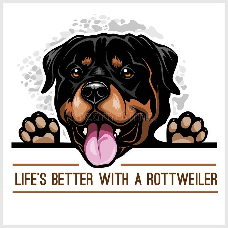 Free Rottweiler - Peeking Dogs - Breed Face Head Isolated On White Royalty Free Stock Images - 169466119