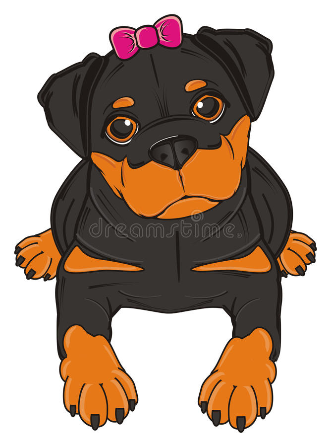 Rottweiler with pink bow. Rottweiler girl with pink bow lying royalty free illustration