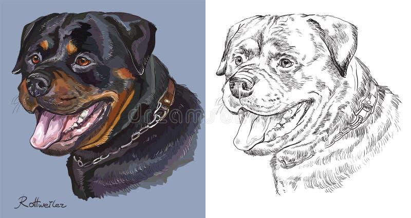 rottweiler portrait coloré et monochrome de vecteur de dessin de main illustration libre de droits