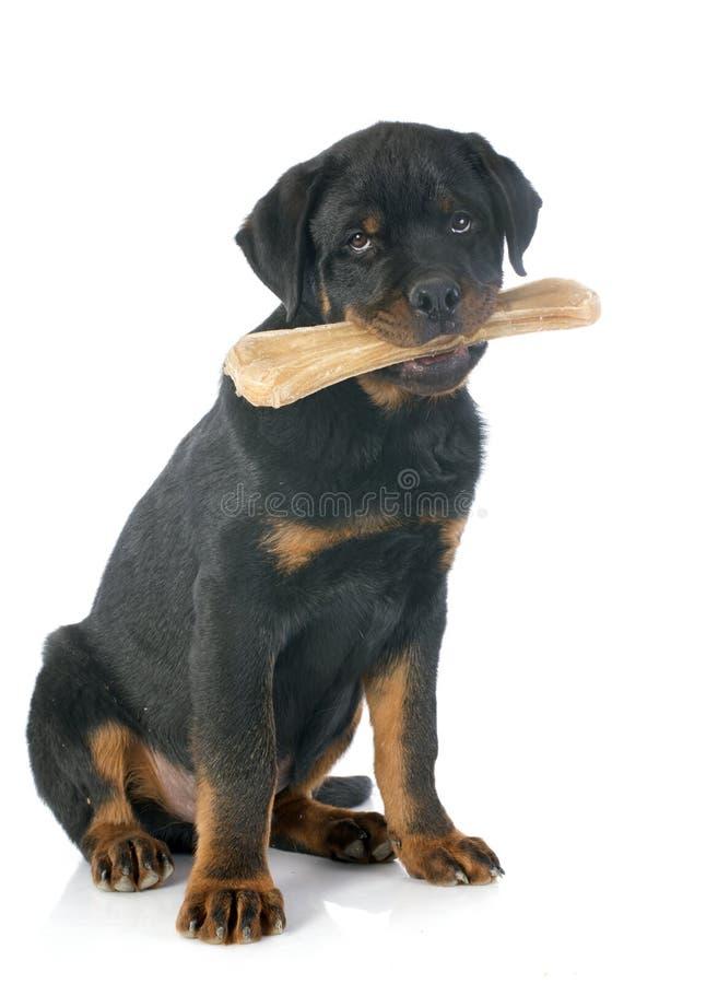 Rottweiler und Knochen lizenzfreie stockbilder