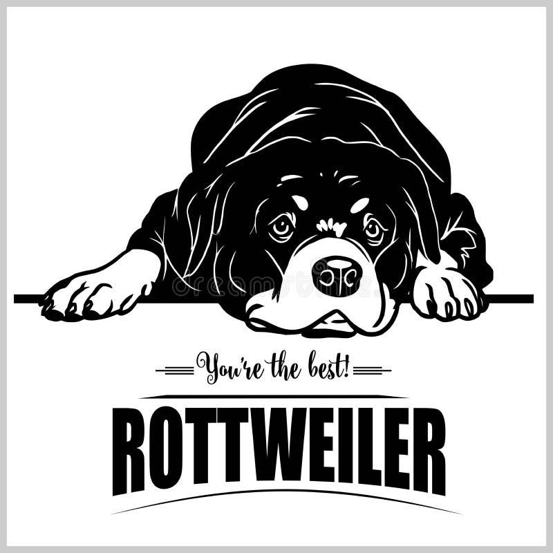 Rottweiler - vectorillustratie voor t-shirt, embleem en malplaatjekentekens vector illustratie