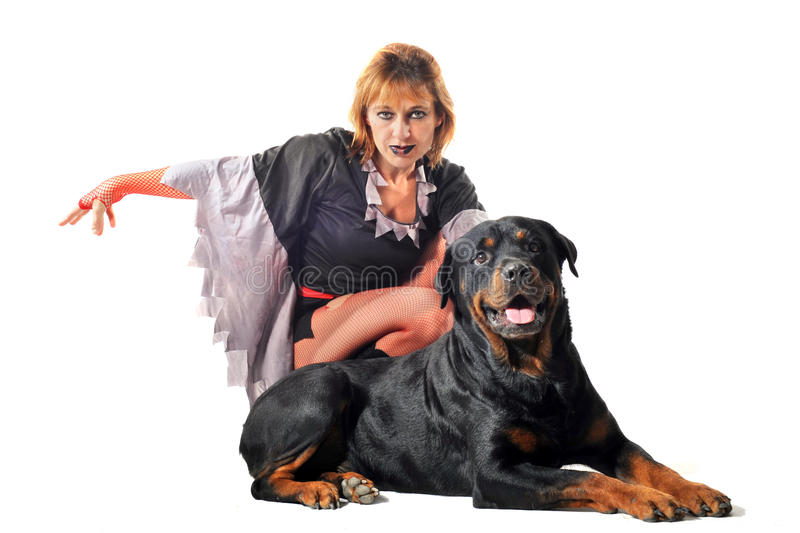Download Rottweiler and witch stock photo. Image of animal, white - 19054260