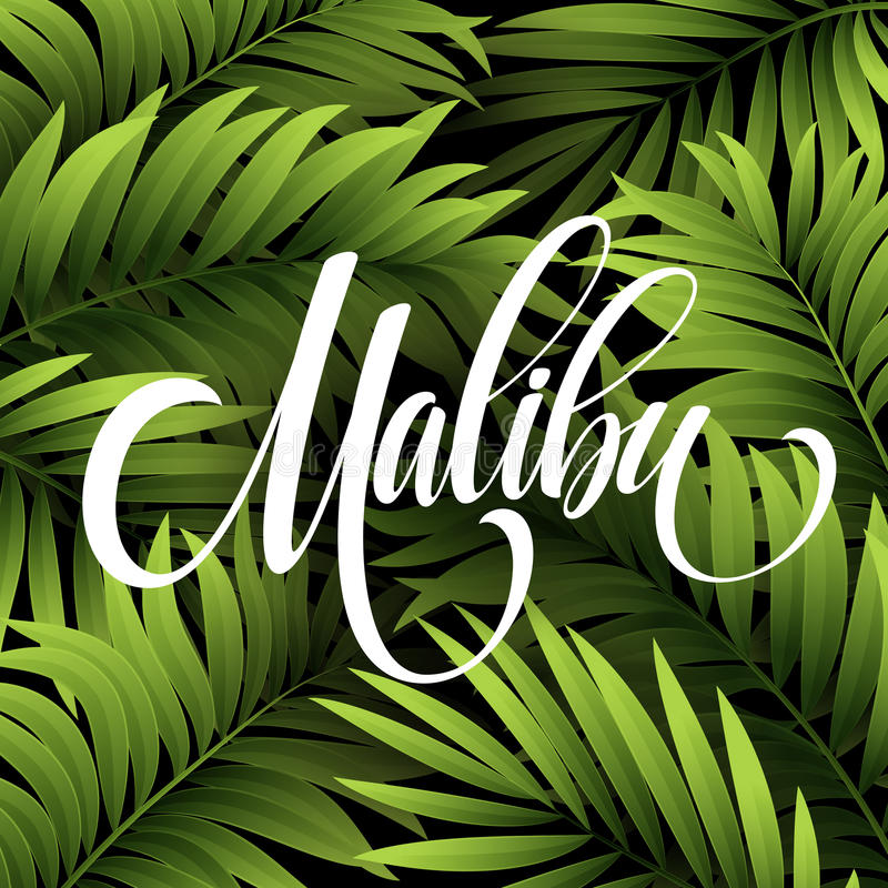 Rotulação da escrita de Malibu Califórnia no fundo tropical em folha de palmeira Ilustração do vetor ilustração do vetor