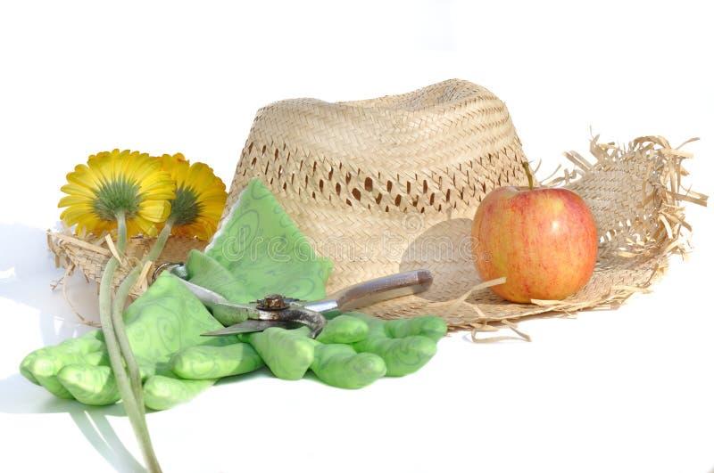 Rotura de verano en jardín foto de archivo libre de regalías