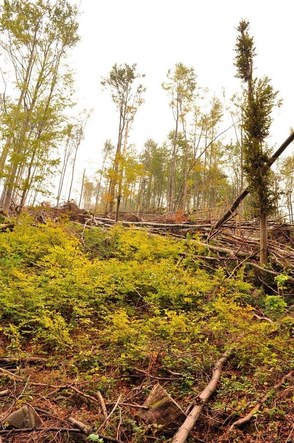 Rotura del hielo en el bosque de la haya del bosque fotos de archivo