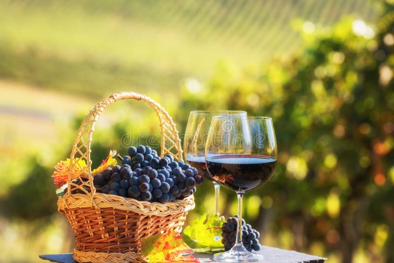 Rotwein im Glas gegen sonnigen Weinberghintergrund lizenzfreie stockfotografie