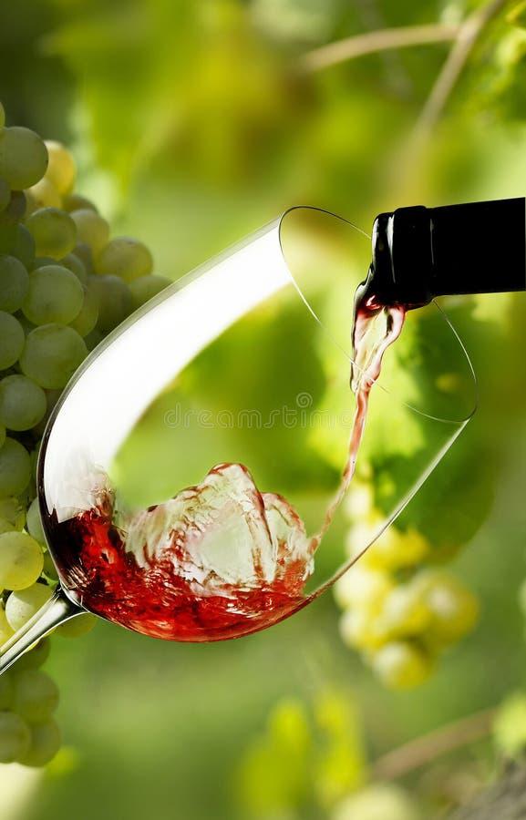 Rotweinglas stockfotografie