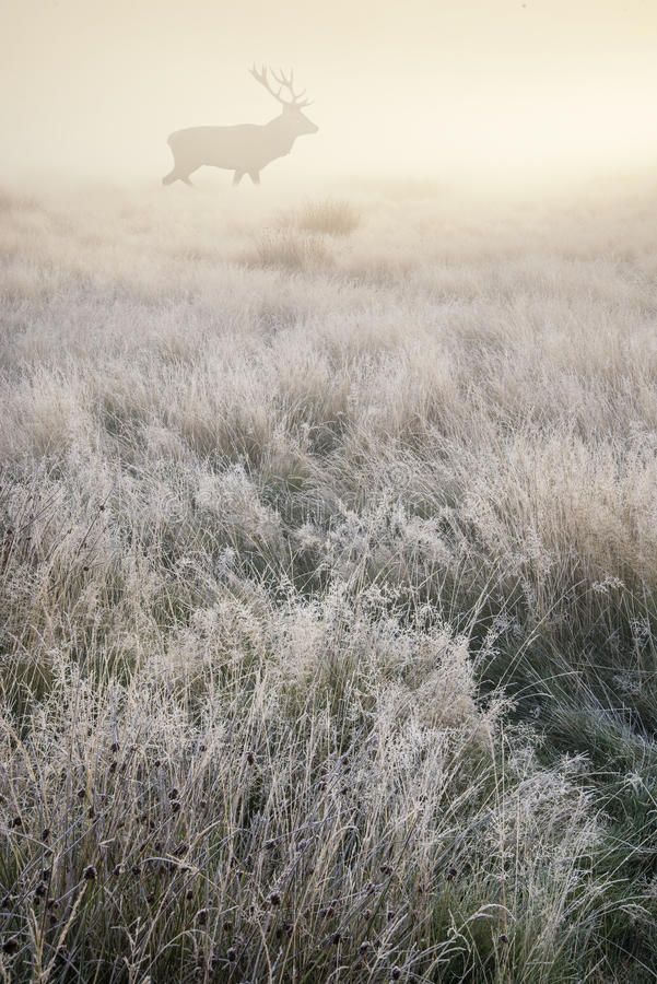 Rotwild in nebeligem Sonnenaufgang Autumn Fall-Wald- und -landschaft lan lizenzfreies stockfoto