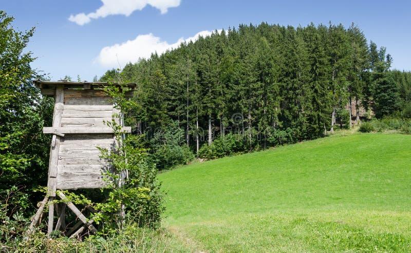 Rotwild stehen entlang Rand der Wiese, horizontale Ansicht lizenzfreies stockfoto