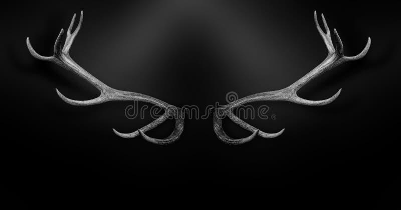 Rotwildgeweihe 3d lokalisierten schwarzes weißes Hintergrundtier lizenzfreie stockfotos