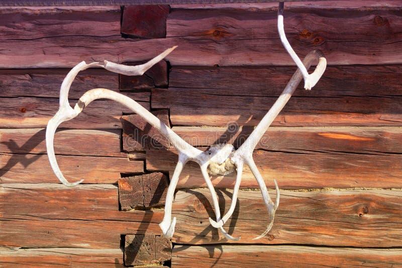 Rotwildhörner, die an der hölzernen Wand hängen lizenzfreies stockbild