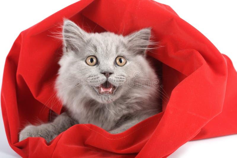 rouge d'isolement britannique de chaton de sac images libres de droits