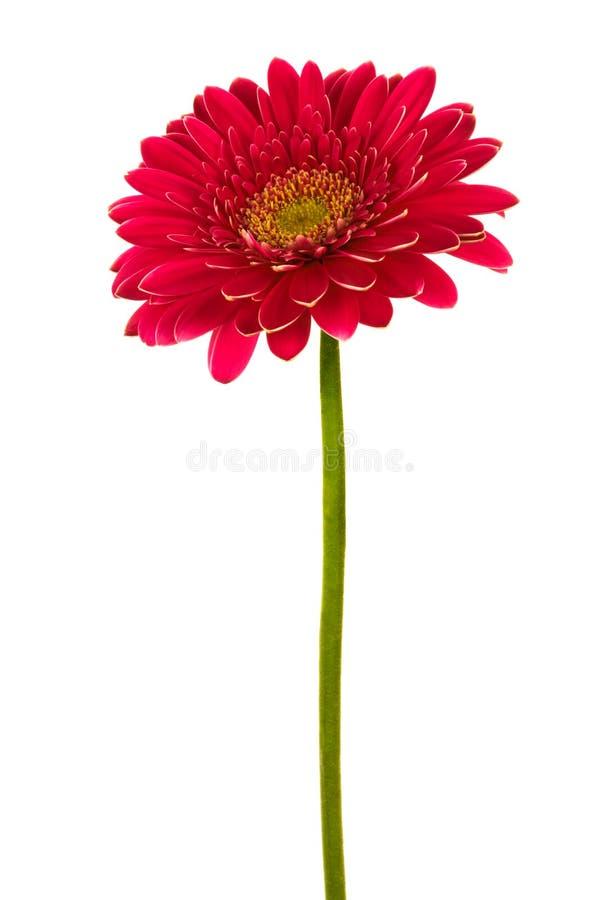 rouge de fleur images stock