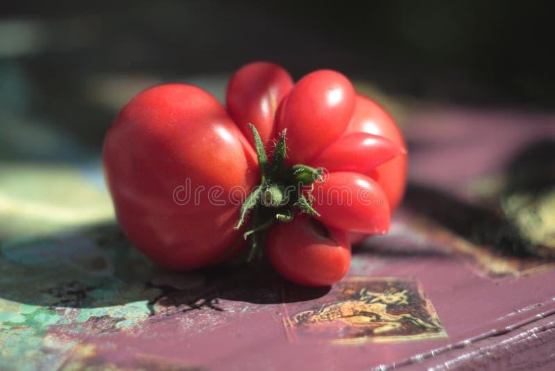 Rouge de tomate photographie stock libre de droits