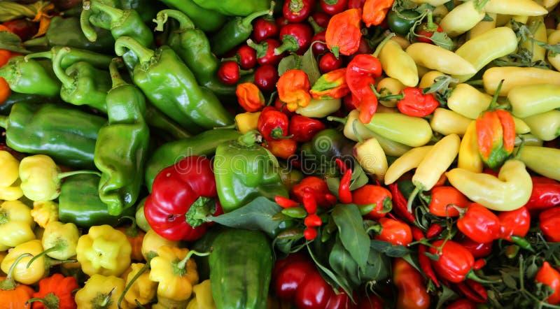 Rouge et poivron vert très épicés en vente photo libre de droits
