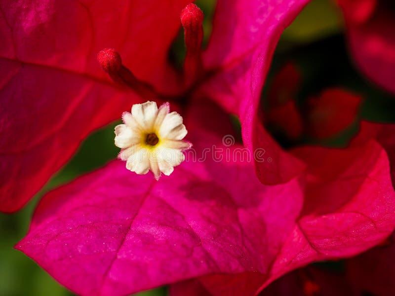 rouge, fin, nature, fleur photos stock