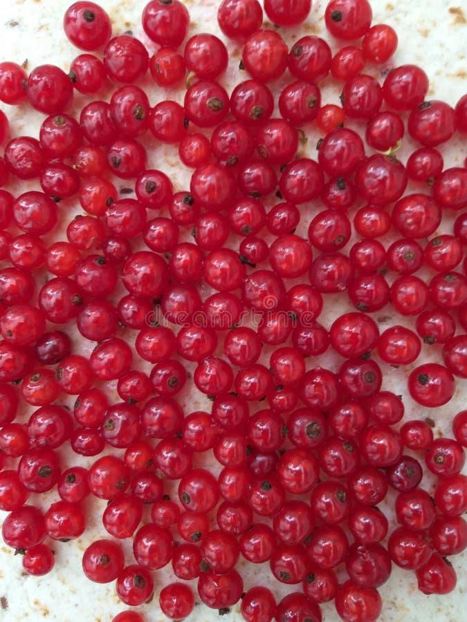 Rouge frais de groseille, fond, baie d'été image libre de droits