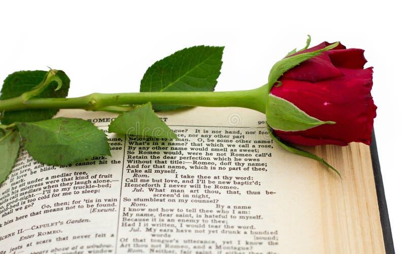 Rouge Rose de Shakespeare Romeo Juliet images libres de droits