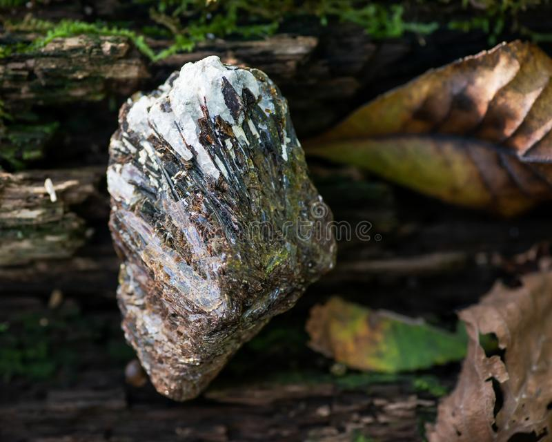 Rough Astrophyllite in matrix specimen from Russia on a tree bark in the forest. Other names: Aastrophyllite, Asterophyll stock photography