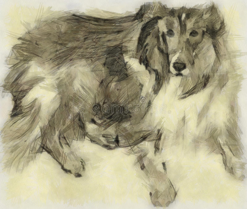 Download Rough Collie stock illustration. Image of cute, graphic - 17743922