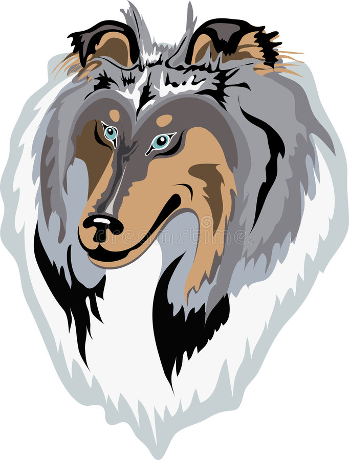 Download Rough Collie Vector(blue-merle) Stock Vector - Image: 7938724