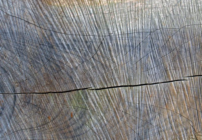 Rough cut cracked natural stained brown timber surface with patterned scratched surface over the natural grain. A rough cut cracked natural stained brown timber royalty free stock photos