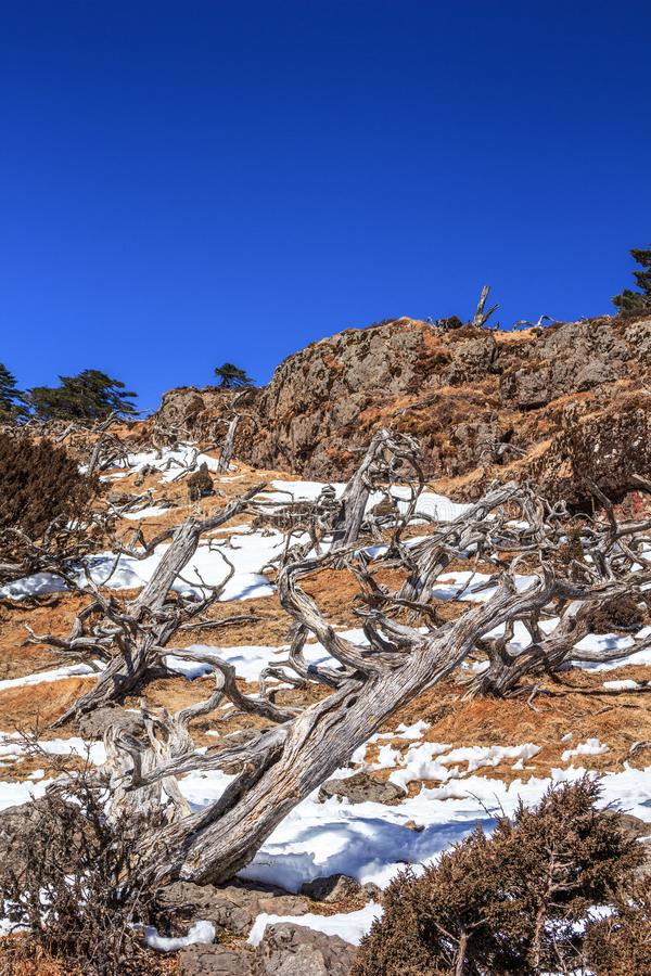 Rough high mountain environment with dry flora stock images