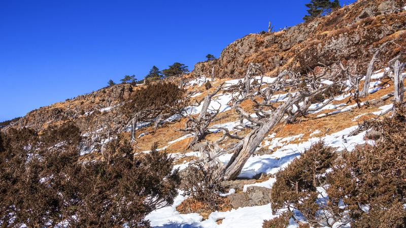Rough high mountain environment with dry flora stock photography