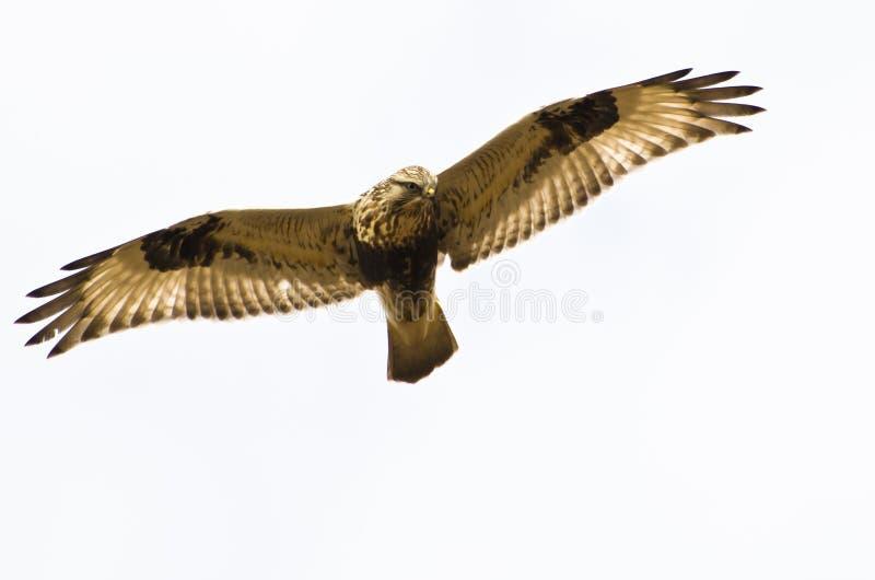 Download Rough-Legged Hawk On White Background Stock Photos - Image: 28866873