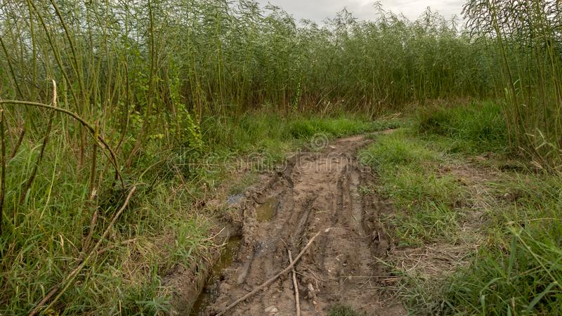 Rough Muddy Path Surrounded with Tall Green Trees and Grass - Rural Road after the Rain stock image