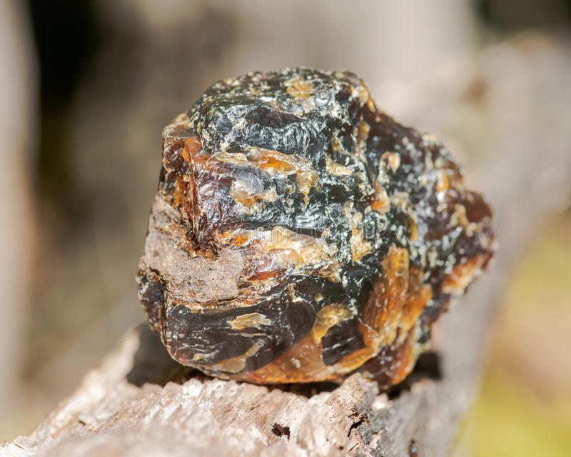 Rough piece of included Blue Amber from Indonesia on wood branch in the forest royalty free stock photography