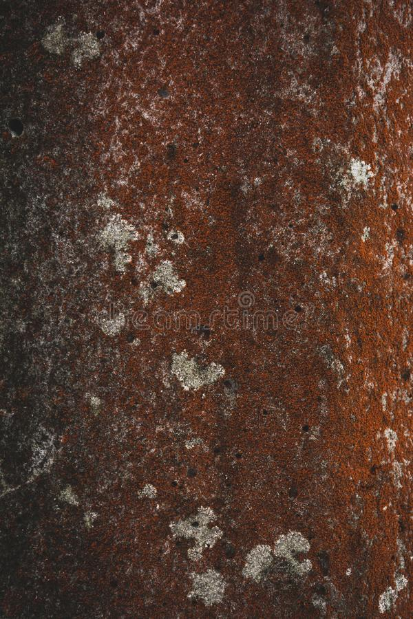 rough red tree bark background royalty free stock photography