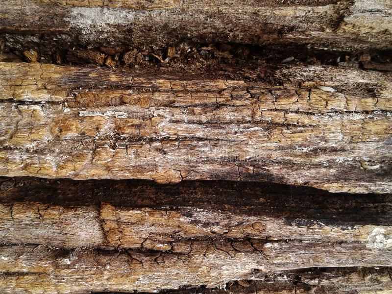 Rough silicified wood surface texture. photo background stock photo