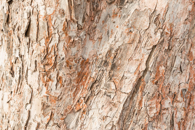 Rough texture of the thick bark of the apple tree, over the surface of many cracks that form the wood cells. An abstract background stock photos