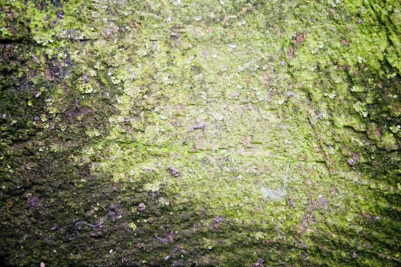Download Rough Textured Grunge Background Stock Photo - Image: 12434796