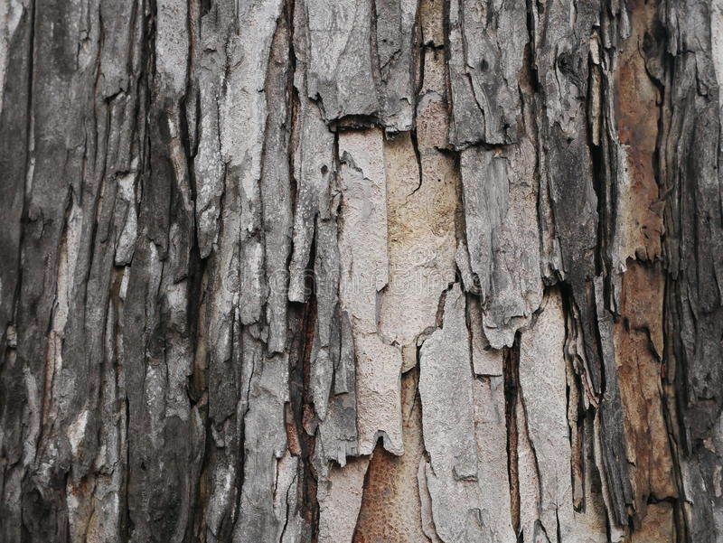 Tree bark gray and brown vertical. Rough tree bark vertical format texture closeup gray and brown royalty free stock photo