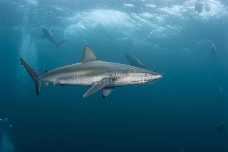Download Rough waters stock photo. Image of ocean, sharks, natal - 23006910