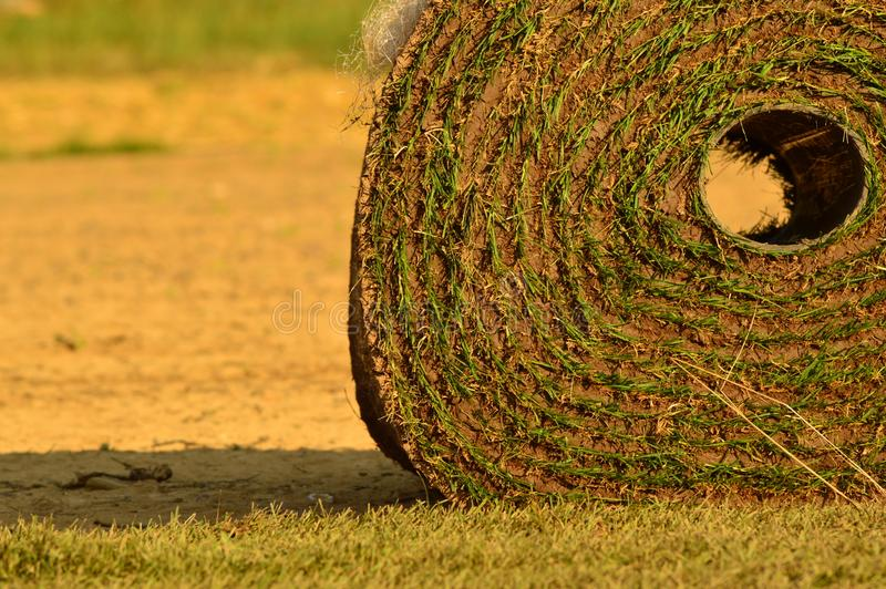 Roulé vers le haut de l'herbe de gazon photo stock