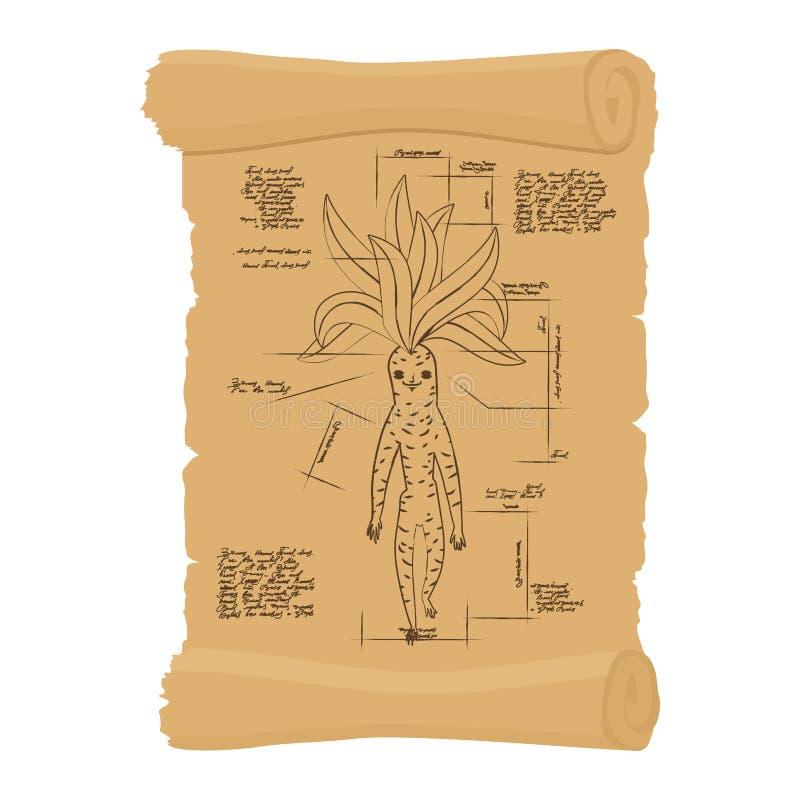Rouleau antique de racine de Mandrake Papyrus archaïque de p légendaire illustration libre de droits