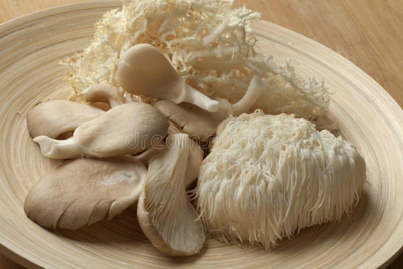 Roulez avec le champignon de corail, le Mane Mushroom du lion et le champignon d'huître image stock