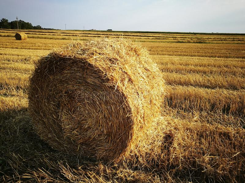 Round bale royalty free stock images