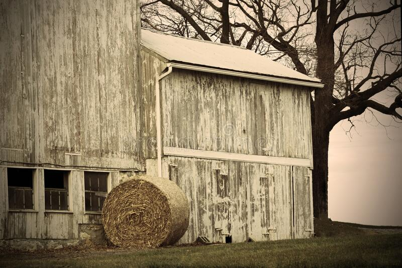 Round Bale and Barn. A round bale of corn beside old barn, bare tree in the background stock photo