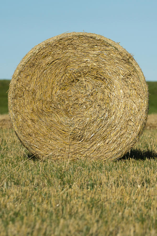 Download Round bale of hay stock photo. Image of country, color - 26515800