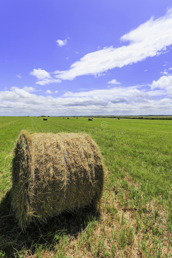 Download Round bale of hay stock image. Image of scenery, harvest - 28670577