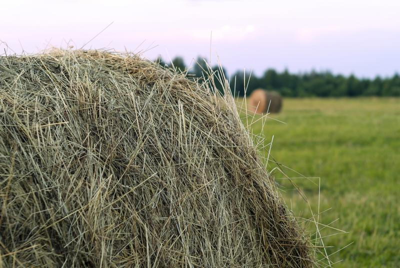 Round bale of hay on a beveled meadow closeup. Large round bale of hay close up on a beveled meadow stock images